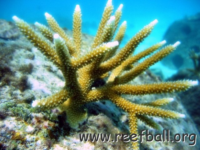 Как сделать коралловый риф