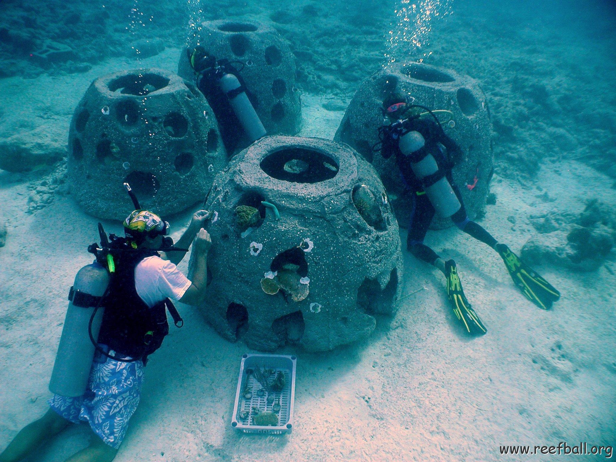 artificial reef essay