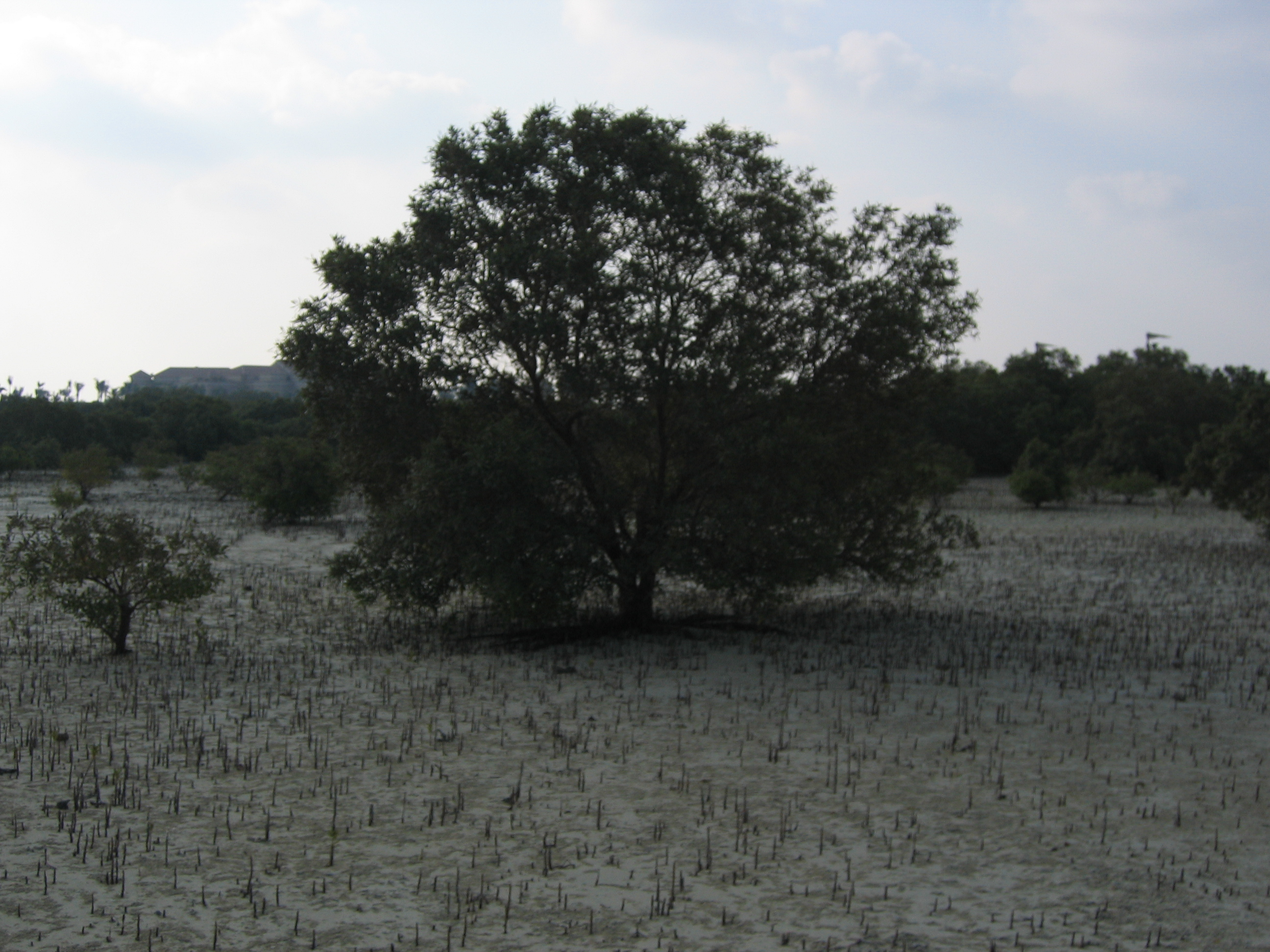 blackmangroveproject 004.jpg