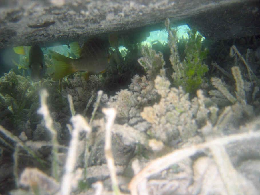 Reef b1